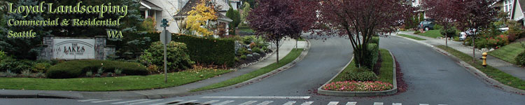 commercial landscape contractor & lawn care maintenance - picture