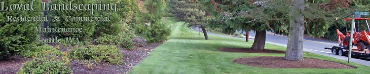 landscape maintenance service seattle - commercial and residential - picture